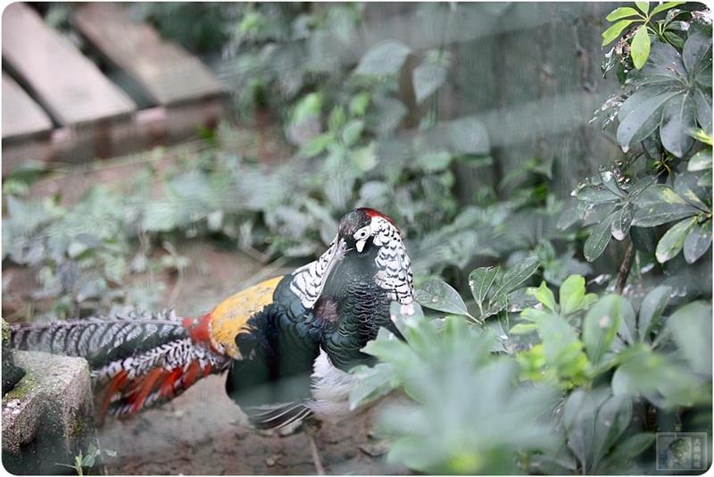 新竹新埔-森林鸟花园-亲子乐园-整座山都是弟弟的溜滑梯